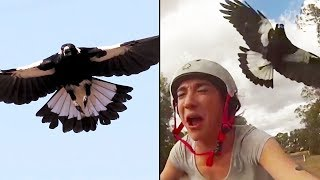 Ozzy Man Reviews: MAGPIES