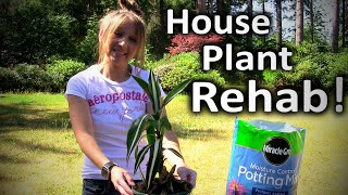 Houseplant Care  -  Bring Your Dying Houseplants Back to Life - DIY