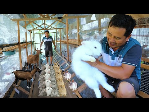 , title : 'RABBIT FARMING basic guide for beginners│How to become successful in rabbit farming &Chicken farming