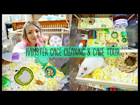 HAMSTER CAGE CLEANING & CAGE TOUR | Hamster DIY Platform FAIL 🐹😩