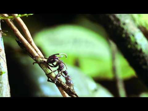 Antibodies sa Giardia positibong pagtatasa