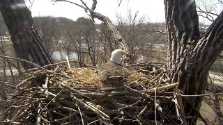 Decorah Eagles 3-23-19, 1:15 pm Human intruder slo-mo
