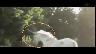 """""""Снятые на камеру"""" Единорог реально существует.""""Captured on camera"""" the Unicorn really exists."""