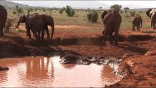 preview picture of video 'Kenya - Malindi -Safari 2011'