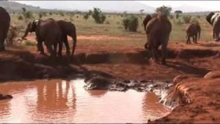 preview picture of video 'Kenya - Malindi -Safari 2011'