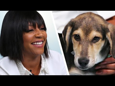Tiffany Haddish Plays With Puppies While Answering Fan Questions
