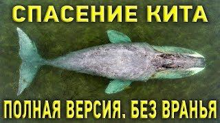 """Гренландский кит и русское раздолбайство: как на самом деле """"спасали"""" кита"""