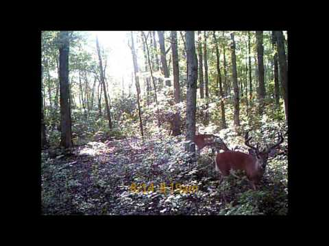 Falling Leaf Outfitters 2015 Deer Cams