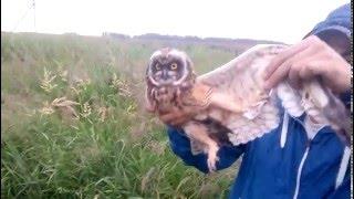 Как поймать сову на даче