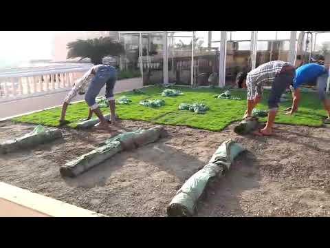 Natural Green Grass Carpet