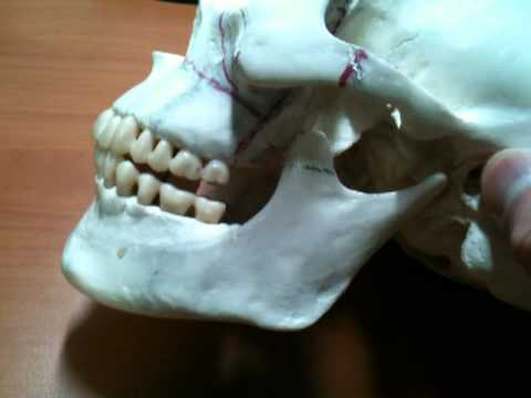 Le traitement du psoriasis oultramigom