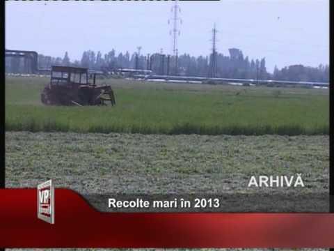 Recolte mari în 2013