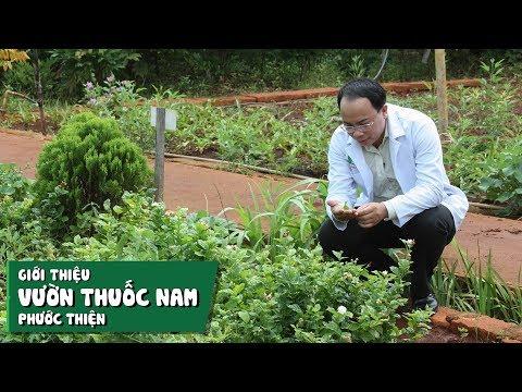 Giới thiệu vườn thuốc nam Phước Thiện - Chùa Hưng Sơn Tự
