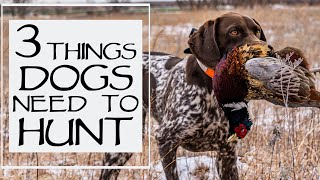 3 Musts For Your Dog To Go Hunting