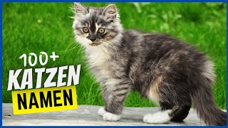 100+ Namen für Katzen & was sie bedeuten (Katzen & Kater)