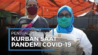 Penampungan Hewan Kurban Berkurang karena Pandemi Covid-19, Pedagang Disarankan Jual Online