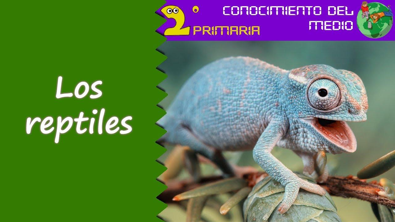 Cono, 2º Primaria. Tema 5. Los reptiles