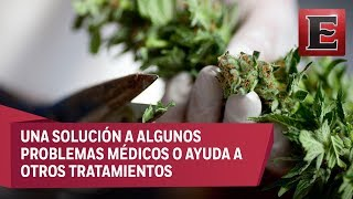 Punto y coma: La cannabis como uso medicinal