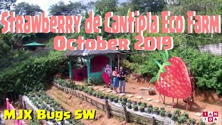Strawberry de Cantipla Eco Farm - Super late upload (Oct. 2019) + MJX Bugs 5W + Onepaa X2000 cam