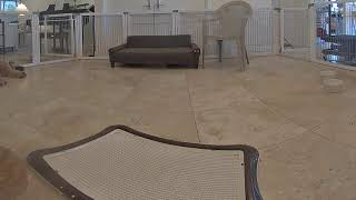 Live Camera Axis M3007