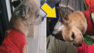6 Years After His Soulmate Was Taken From Him, This Heartbroken Dog Recognized A Familiar Scent