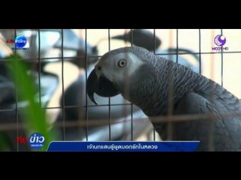 นกพูดได้ 5 สายพันธุ์ ถึงกับอึ้ง ทึ่ง มาเป็นชุด พูดไปได้ 555 Talking Bird