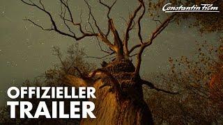 Das geheime Leben der Bäume Film Trailer