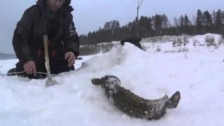 Ловля налима зимой в иркутской области