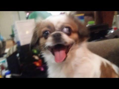Sammy - Cutest Dog in the world?