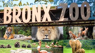 Short Clippings Of My Bronx Zoo Tour | Bronx Zoo 2020