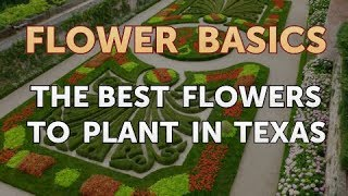 The Best Flowers to Plant in Texas