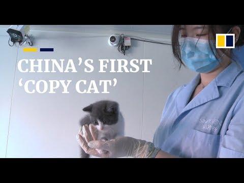 Tiga Puluh Lima Ribu Dollar Biaya Untuk Mengklon Kucing Ini