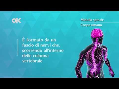 Osteocondrosi 1 maggio dalle instabilità disc