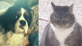 Meilleures Vidéos Drôles de Chat et de Chien 🐶🐱- Best Funny DOGS et CATS #118