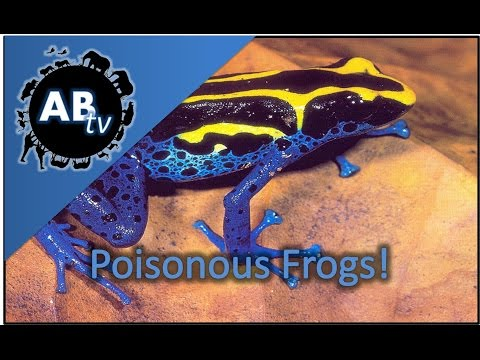 Poisonous Frogs : SnakeBytesTV : AnimalBytesTV