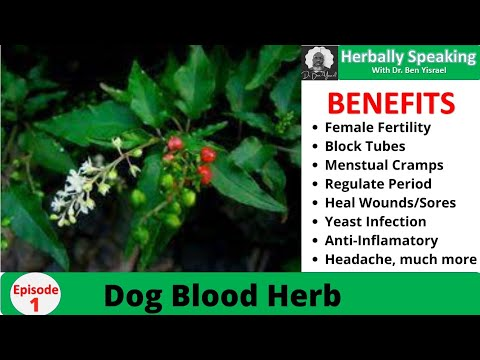 Herbally Speaking Episode 1 (Dog Blood) - Free video search site