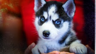 Top 10 Cute Animals On the Planet