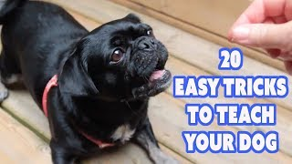 Bored stuck at home? Try 20 Easy Tricks to Teach Your Dog