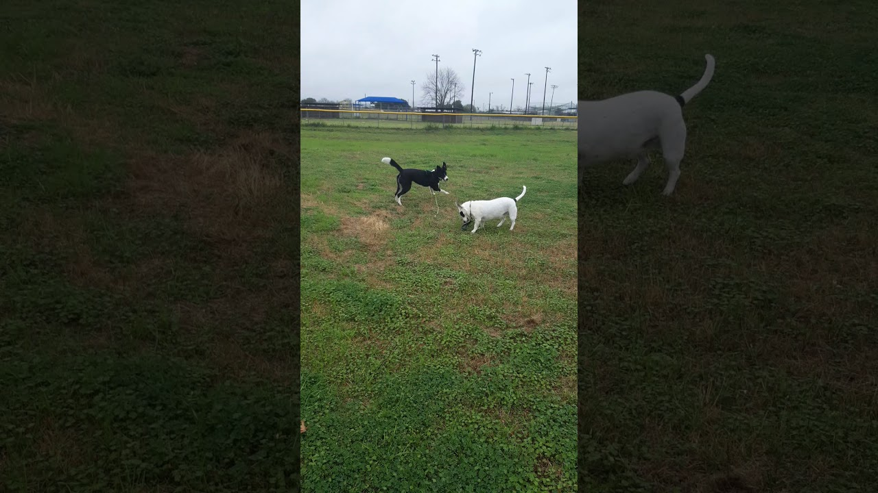 Waggin' Trails Dog Park: dog tested and dog approved