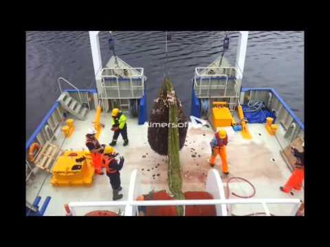 Fra forskningsskipet RV «Gunnerus». 1,5 tonn kronemaneter plasker ned på dekk. Video: Arve Knutsen, NTNU