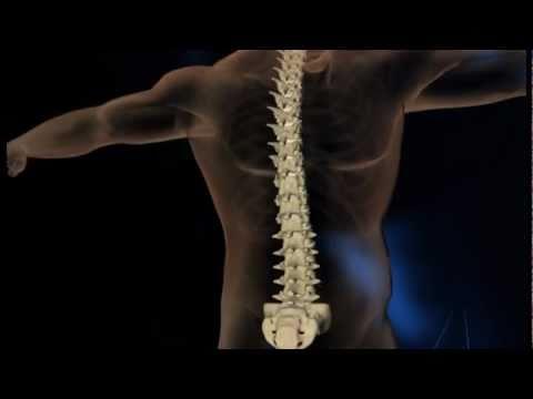 Anatomische Zone zur Behandlung von Rückenschmerzen