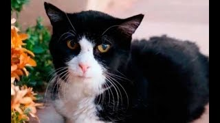 Семья взяла из приюта 20-летнего кота! Они даже не подозревали что будет дальше
