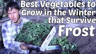 Best Vegetables to Grow in the Winter that Survive Frost