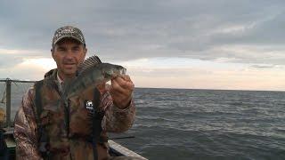 Озере для ловля окуня на онежском
