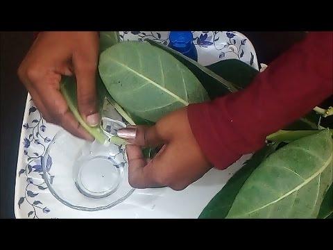 Probiotics para sa paggamot ng kuko halamang-singaw