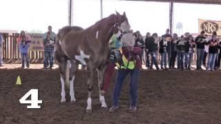 Horse Judging - 2 & 3 Year Old Geldings