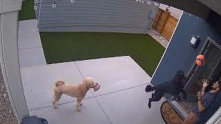 Камера видеонаблюдения Reolink Argus 2 1080P водонепроницаемая, работа до 6 месяцев от компании Интернет-магазин Kamerka - видео 2