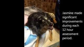 Jasmine's Story - Canine Health