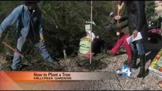 How to Plant a Tree Salt Lake City Utah