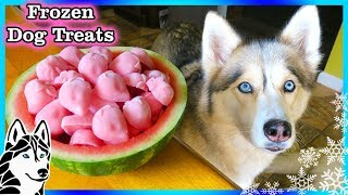 STRAWBERRY WATERMELON DOG TREAT   How to make Frozen DIY Dog Treats    Snacks with the Snow Dogs 82